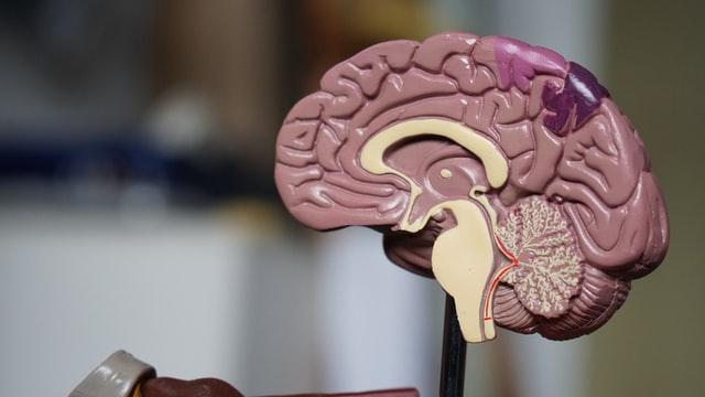 cerveau et psychologie